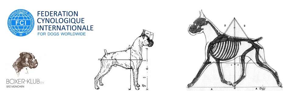 Lo Standard del Boxer